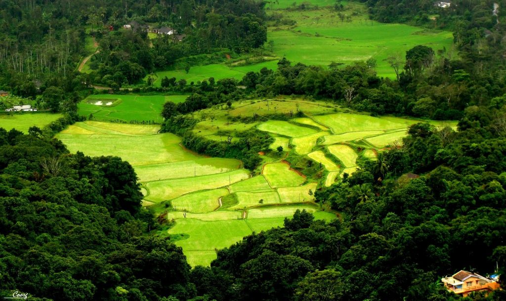 paddy fields and green forest in coorg