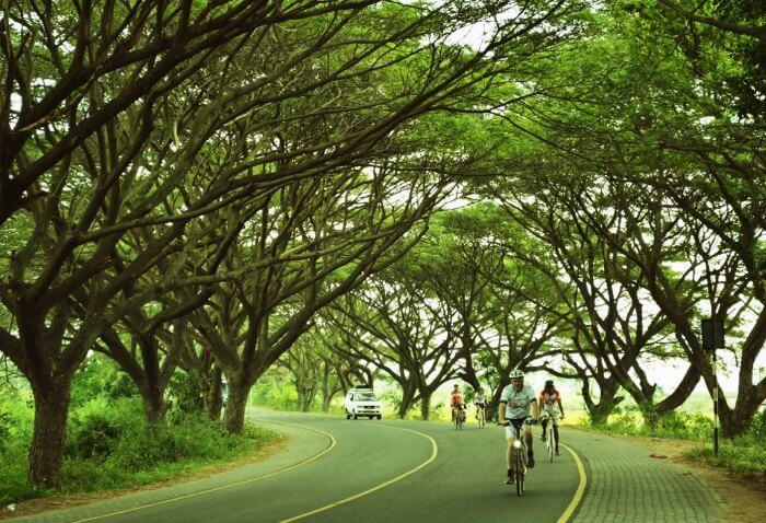 cycling in greenery and trees