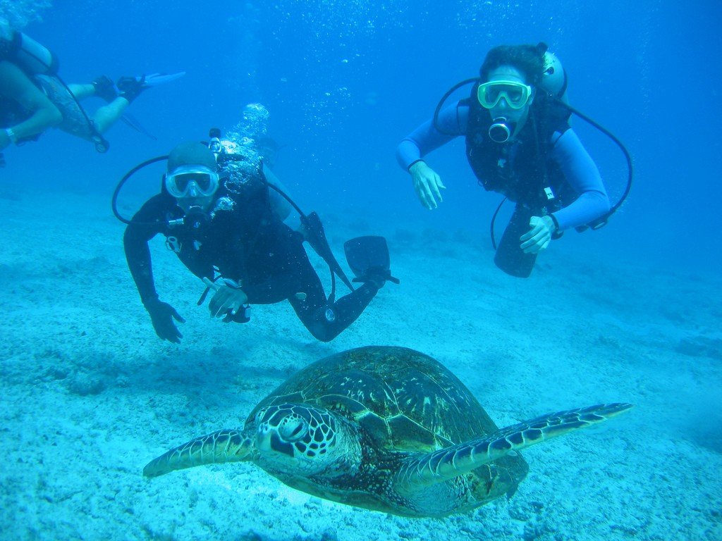 divers doing diving and following a tortoise in bangalore