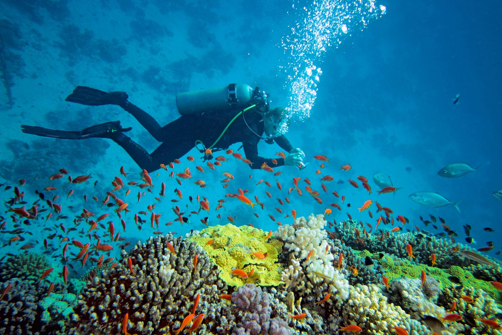 diver doing scuba diving in andamans