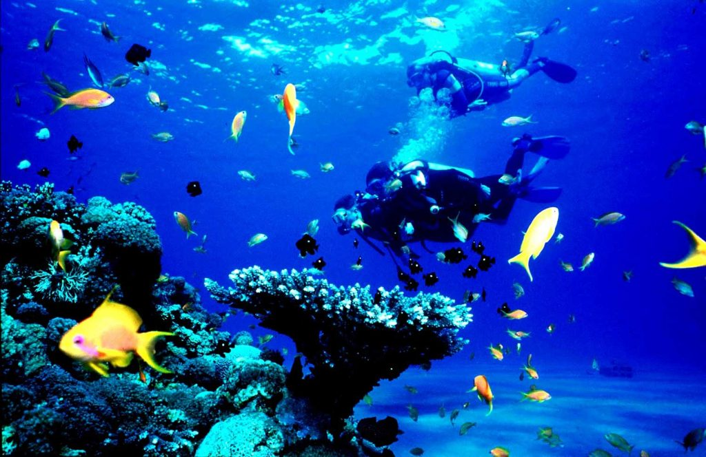 divers doing diving in Lakshadweep and yellow fishes