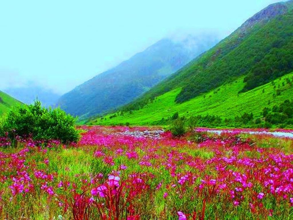 green lush valley and flowers in valley of flowers trek