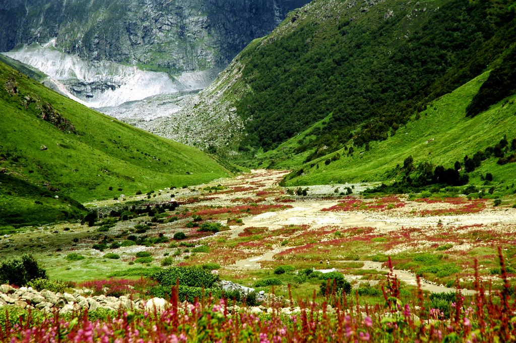 green lush valley and flowers blossom in valley of flowers trek